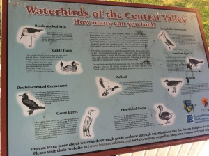 Waterbirds of the Central Valley