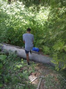 THis tree fell across the trail