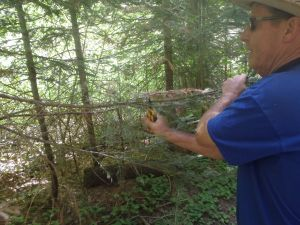 Phil using his pocket hedge clippers to cut away small tree branches crossing the trail